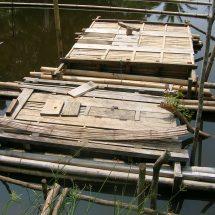 Pemeliharaan Ikan Patin Dalam Keramba