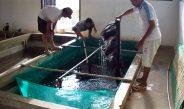 Ragam teknologi Budidaya Ikan Ramah Lingkungan