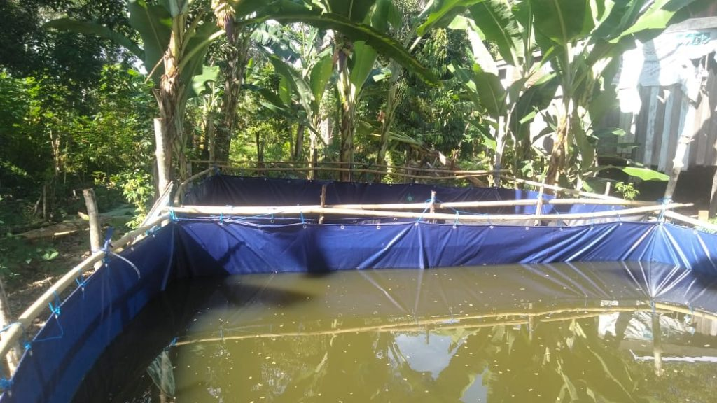Kolam Terpal, Peluang Usaha Budidaya Ikan Menjanjikan
