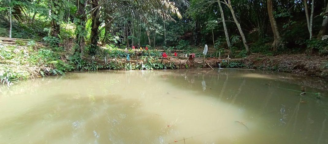 Geliat Usaha Ikan Lele, Patin dan Nila dalam Kolam Tanah di Kampung Gemuhan Asa