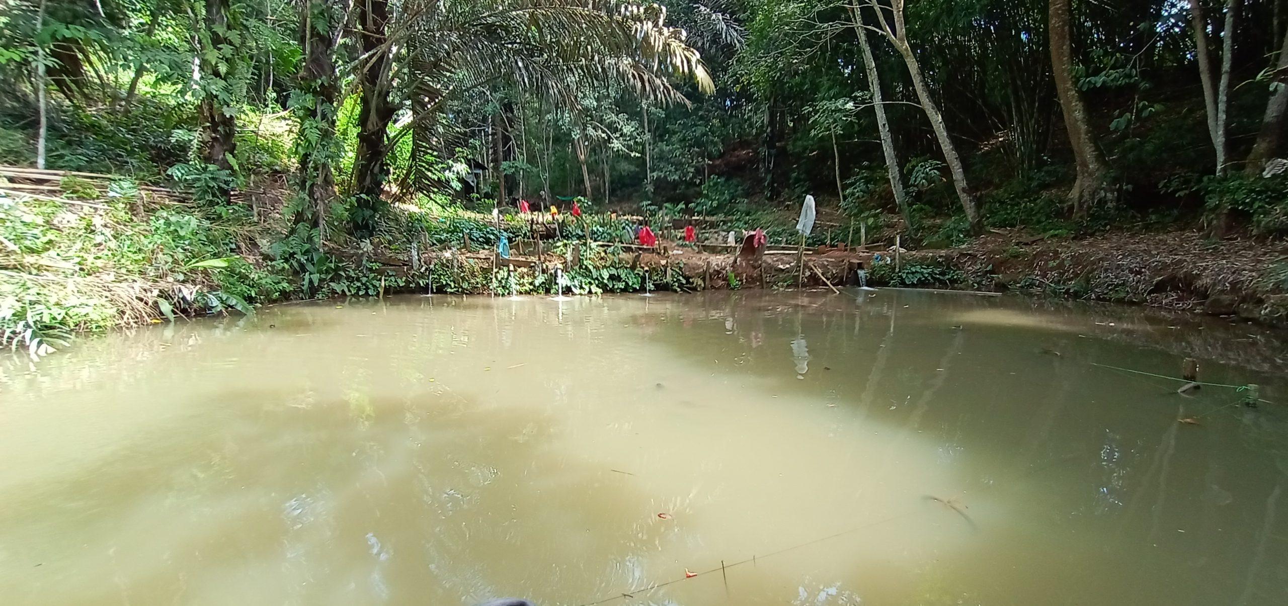 Geliat Usaha Ikan Lele Patin Dan Nila Dalam Kolam Tanah Di Kampung Gemuhan Asa Dinas Perikanan Kabupaten Kutai Barat