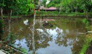 Kembangkan Usaha Mina Wisata, Kelompok Tani Agape Bersama Terima Bantuan Sarana Produksi Dinas Perikanan