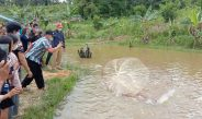 Bukti Keseriusan dan Kerja Keras, Kelompok Pembudidaya Ikan Agape Sejahtera Panen Perdana