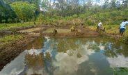 Pokdakan Mina Harapan Jaya, Manfaatkan Lahan Tanah Untuk Budidaya Ikan